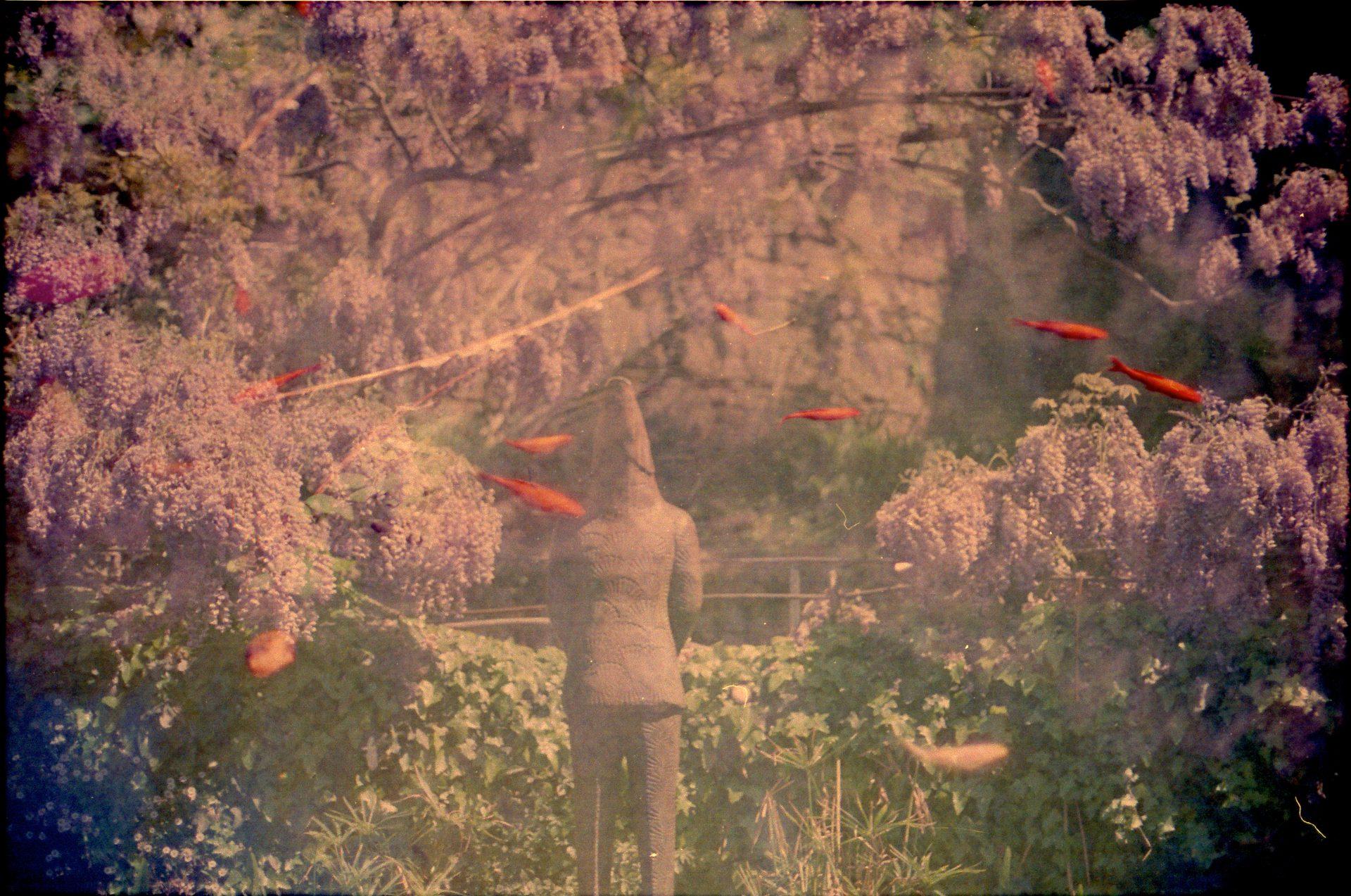 fish&creature-unseen_0001
